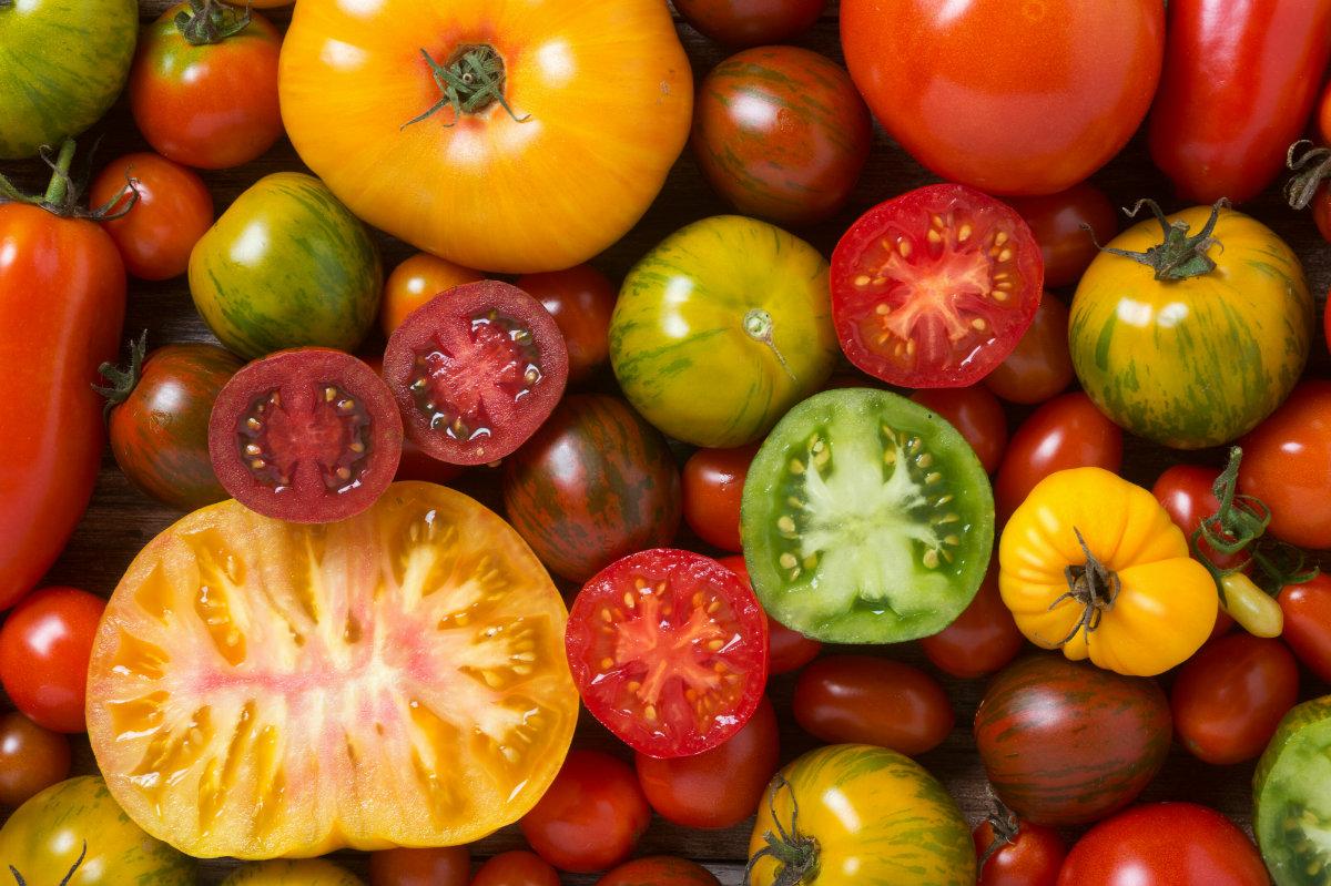 varietà dei pomodori