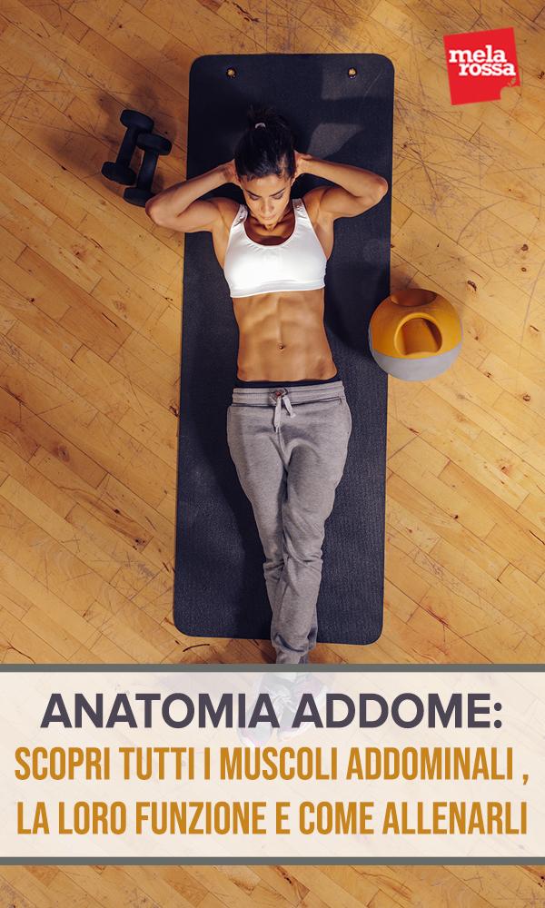 anatomia-addome