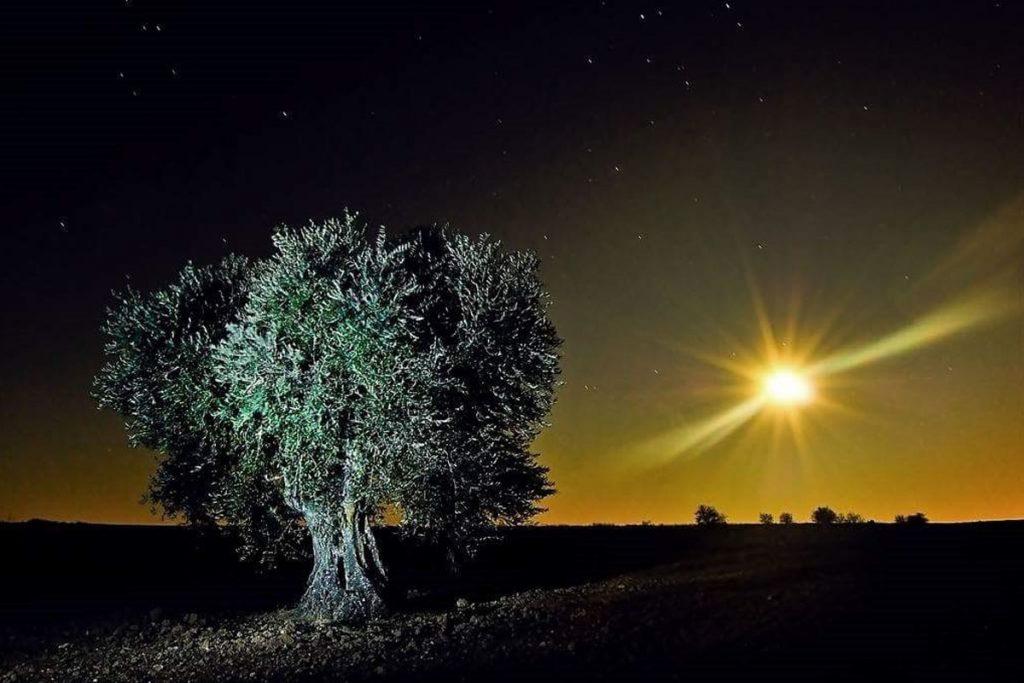 notturno con olivo