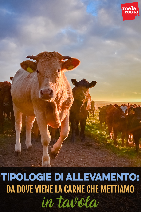 tipologia di allevamento: da dove viene la tua carne