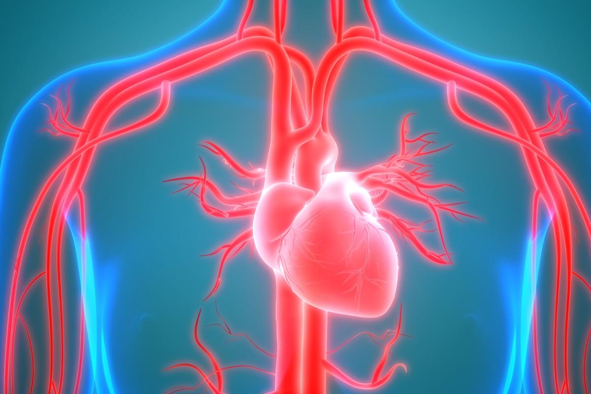 arterie, come funzionano