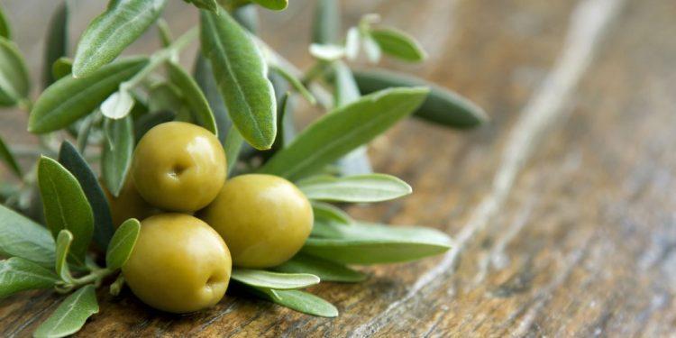 foglie-olivo-proprietà-benefiche