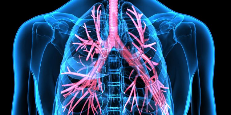 L'obesità causa un accumulo di grasso nei polmoni e favorisce l'asma