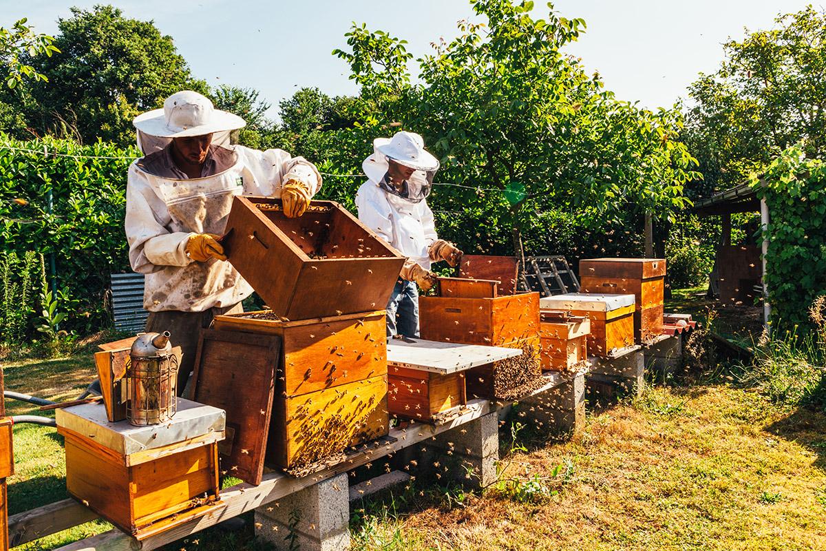 miele: produzione