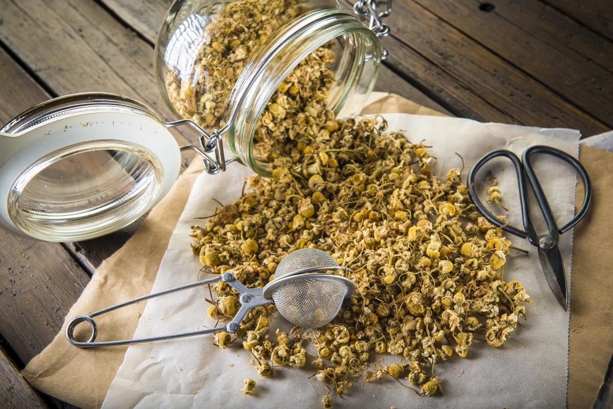 camomilla essiccata: come prepararla in casa