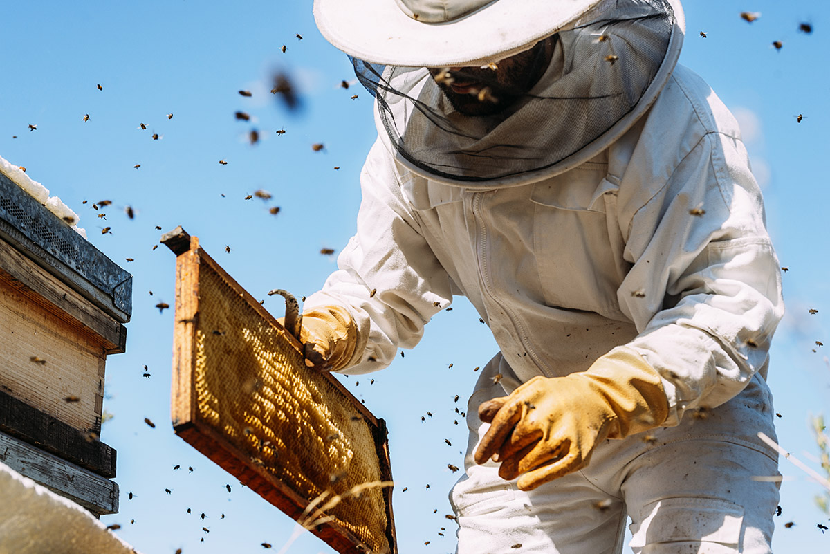 Miele: apicoltura, come funziona