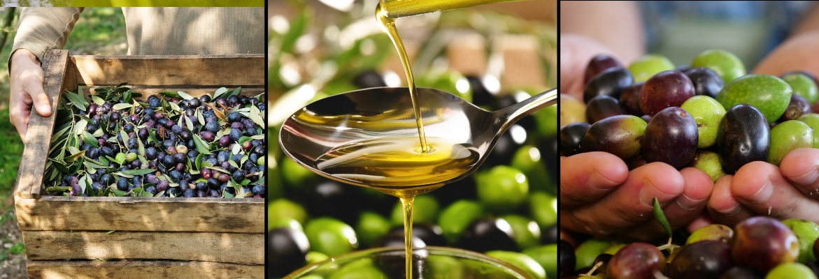 varietà delle olive