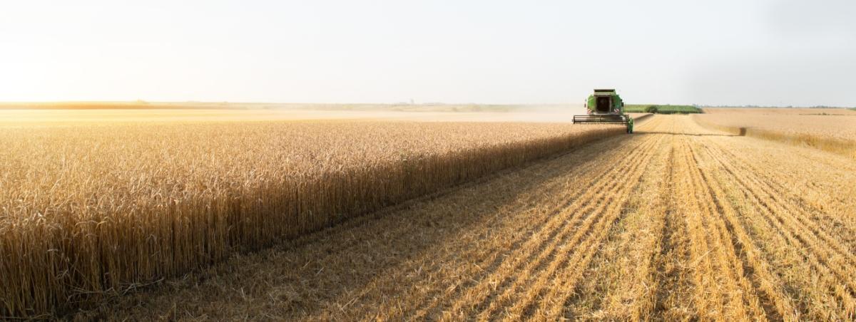frumento: coltivazione