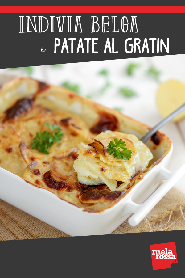 indivia belga e patate al gratin