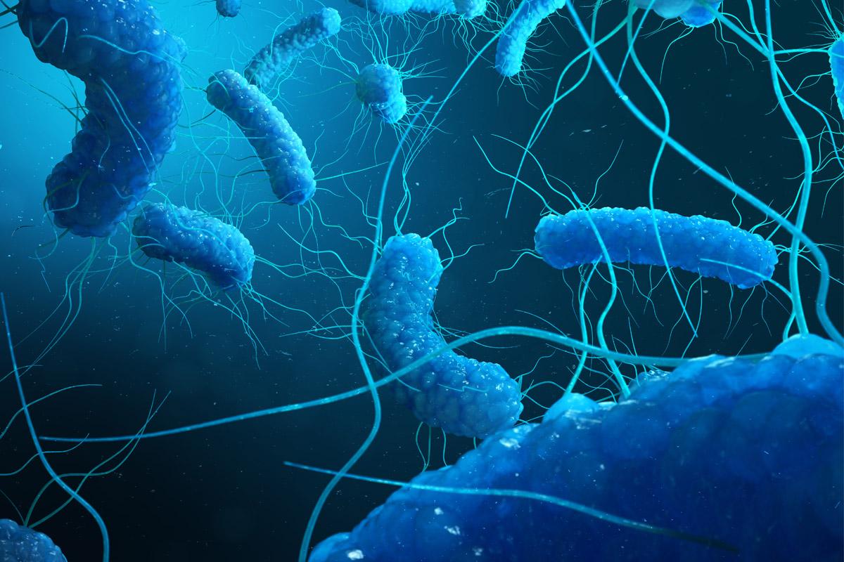 infarto legame batterio escherichia coli