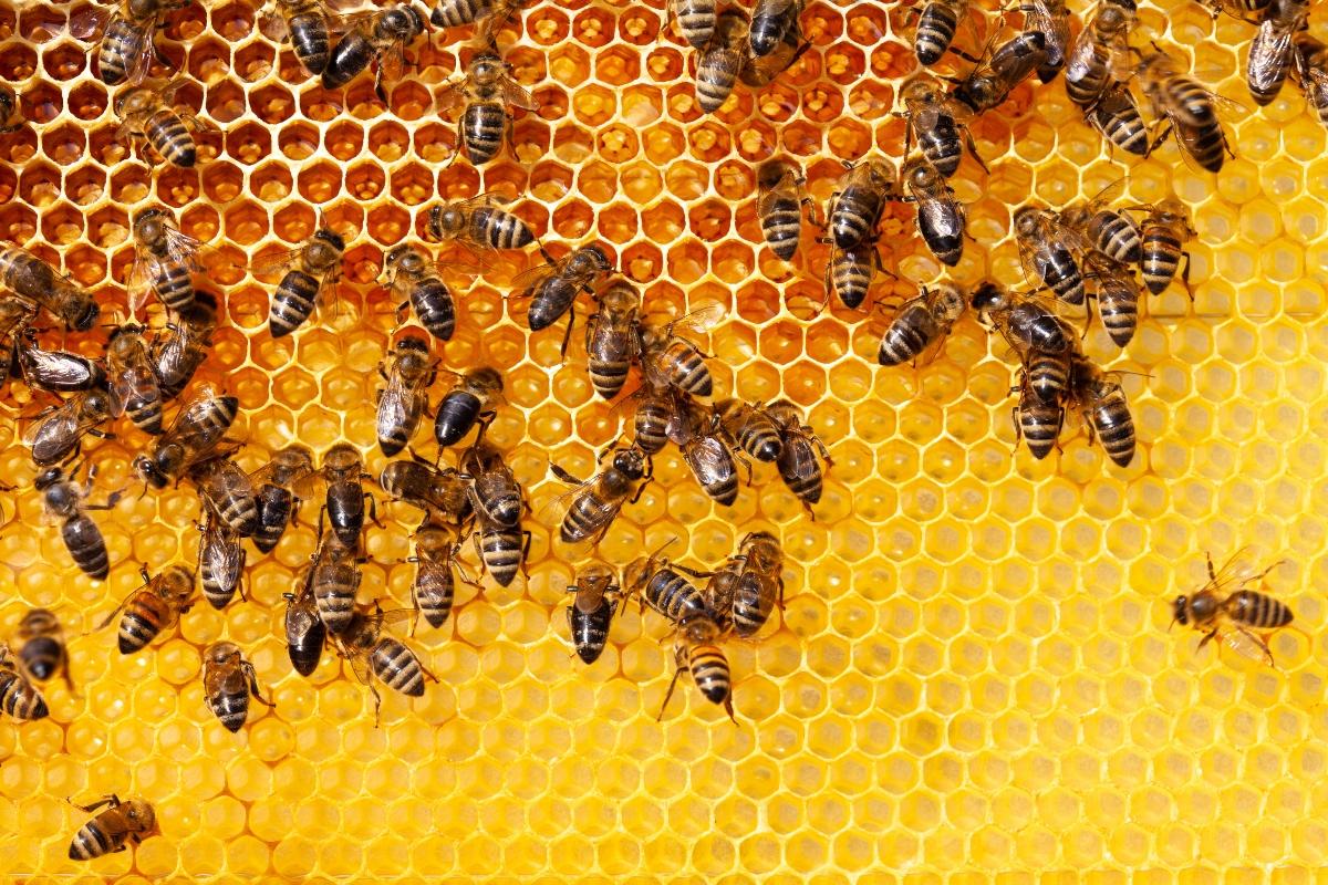 miele: apicoltura