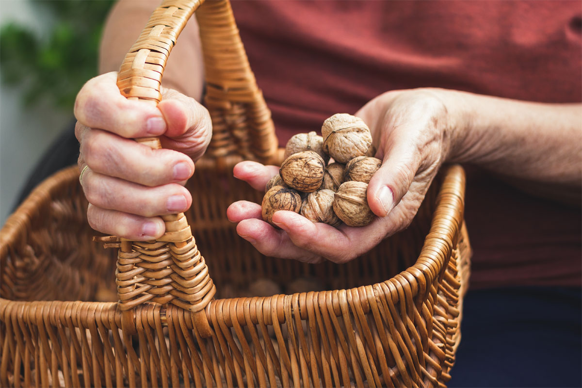 Noci rallentano declino cognitivo anziani a rischio