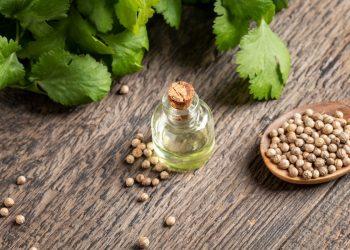 coriandolo: cos'è, botanica, storia, valori nutrizionali, benefici e ricette