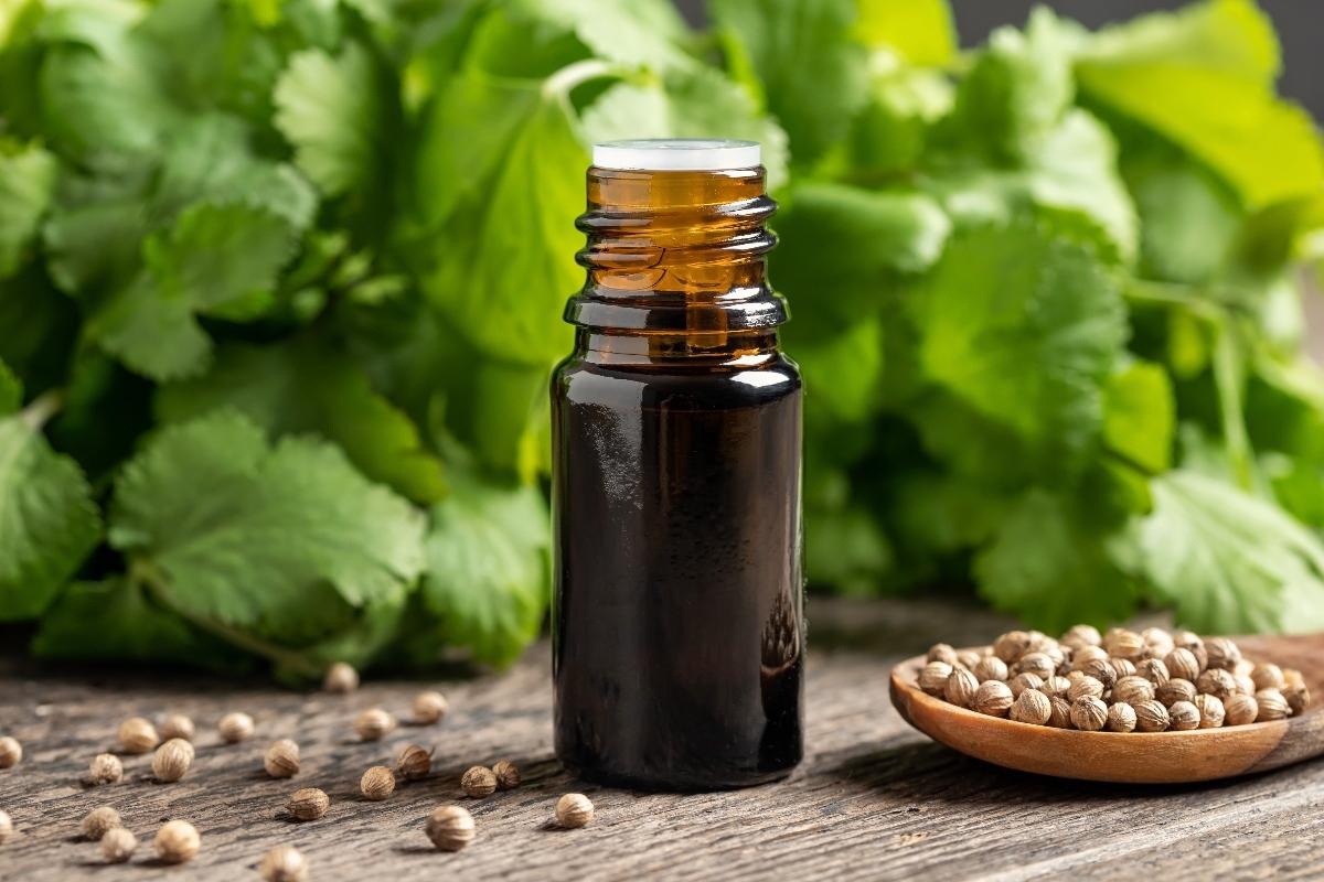 coriandolo: olio essenziale