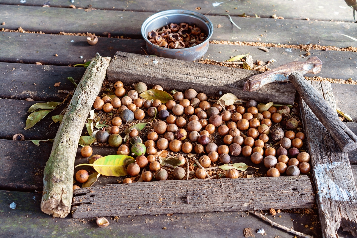 noci di macadamia: storia