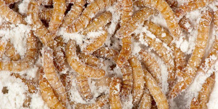 In Italia si sperimenta una farina ottenuta dalle tarme della farina