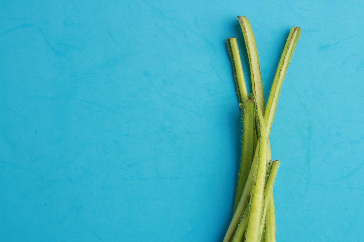 borragine: come cucinare