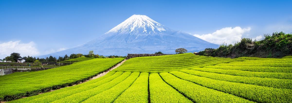 tè verde in Giappone
