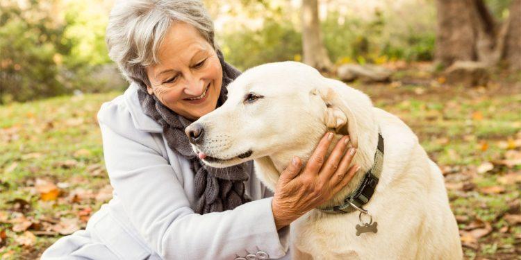 Cani migliori amici di chi soffre di diabete: fiutano l'ipoglicemia e danno l'allarme