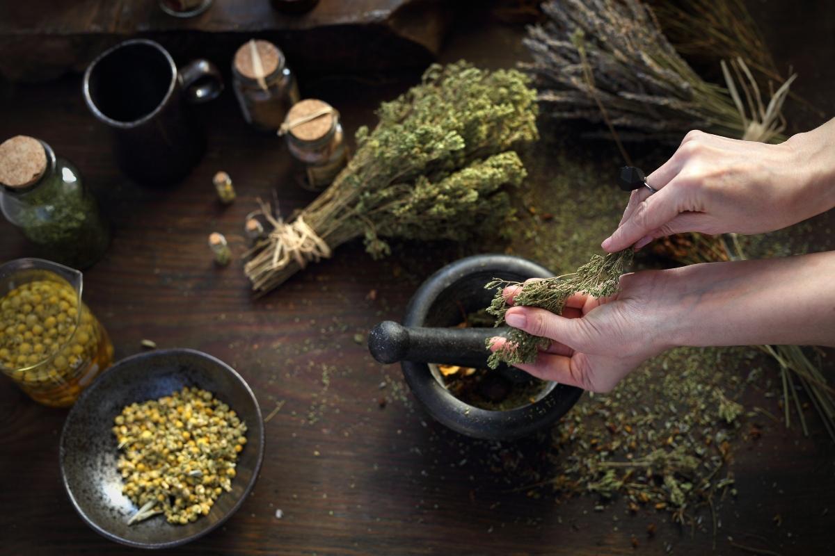 fitoterapia: guida all'uso delle piante