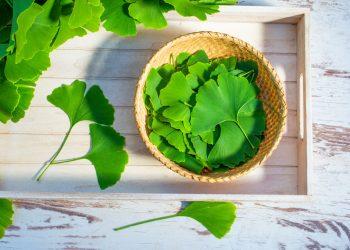 Ginkgo biloba: che cos'è, benefici, valori nutrizionali e usi in cucina