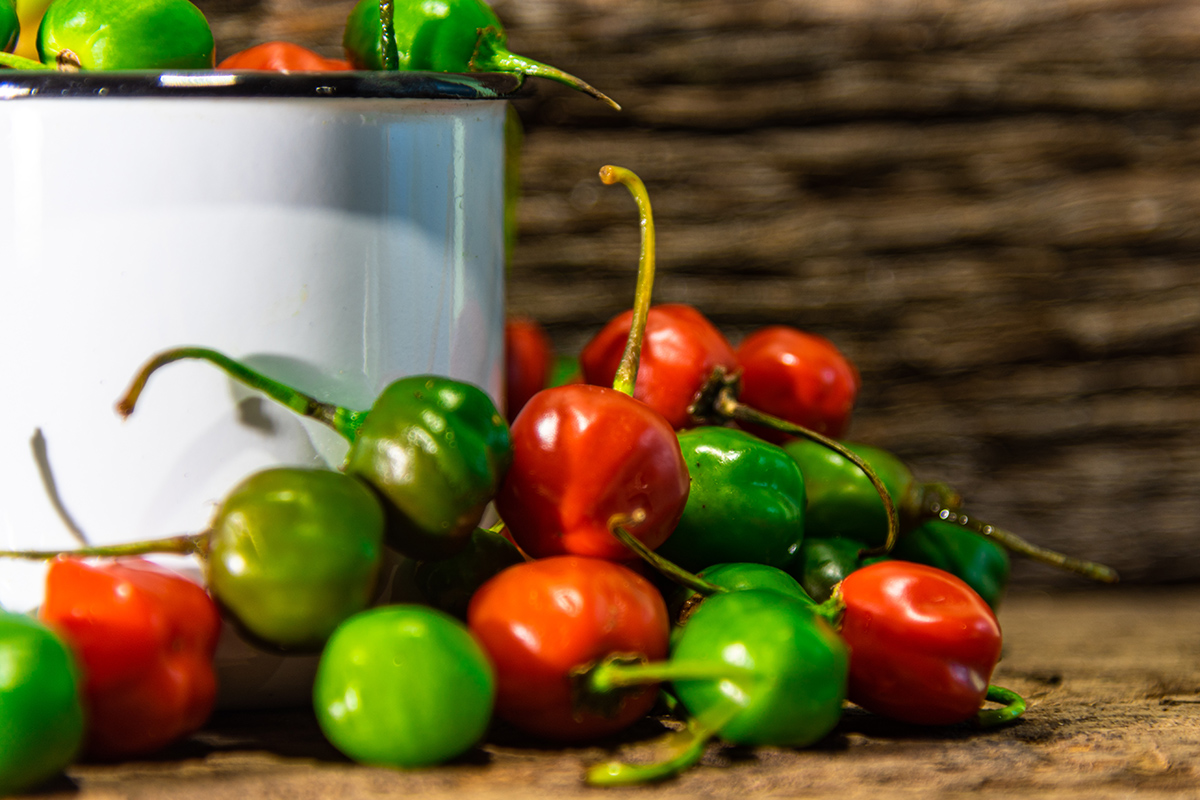 Peperoncino: specie Capsicum Chinense