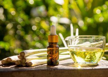 Citronella: cos'è, proprietà terapeutiche, coltivazione della pianta anti zanzare e ricette