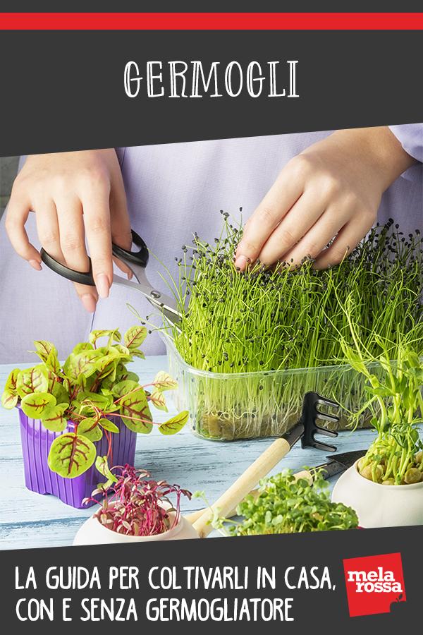 germogli guida coltivazione a casa