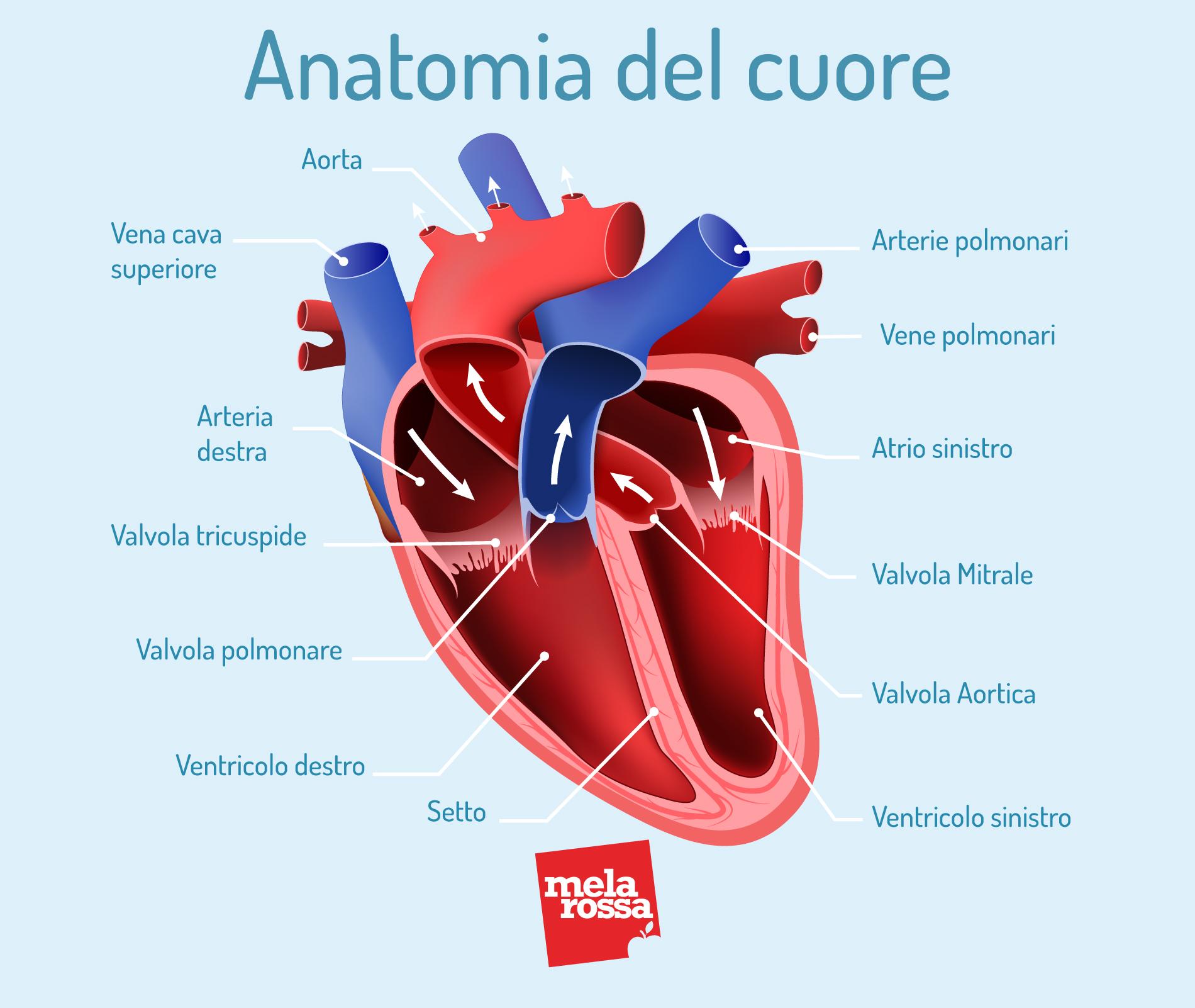 ipertensione e  cuore