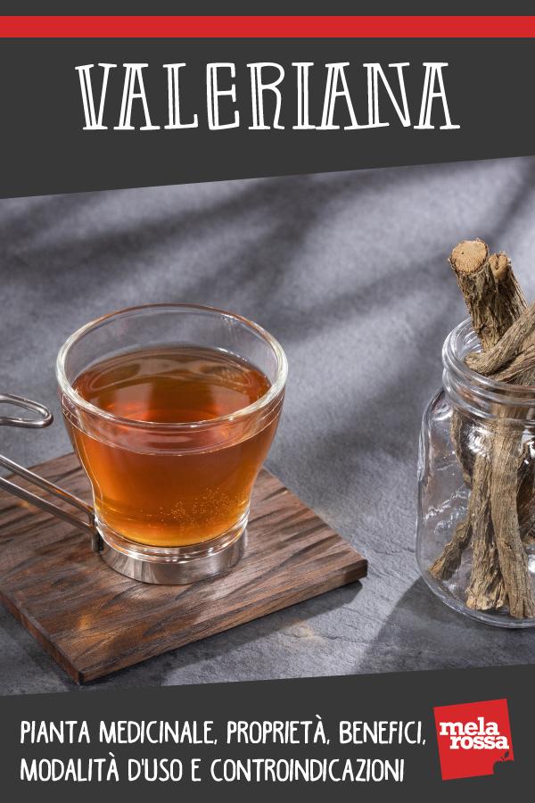 Valeriana : pianta medicinale, proprietà medicinali, benefici modalità d'uso
