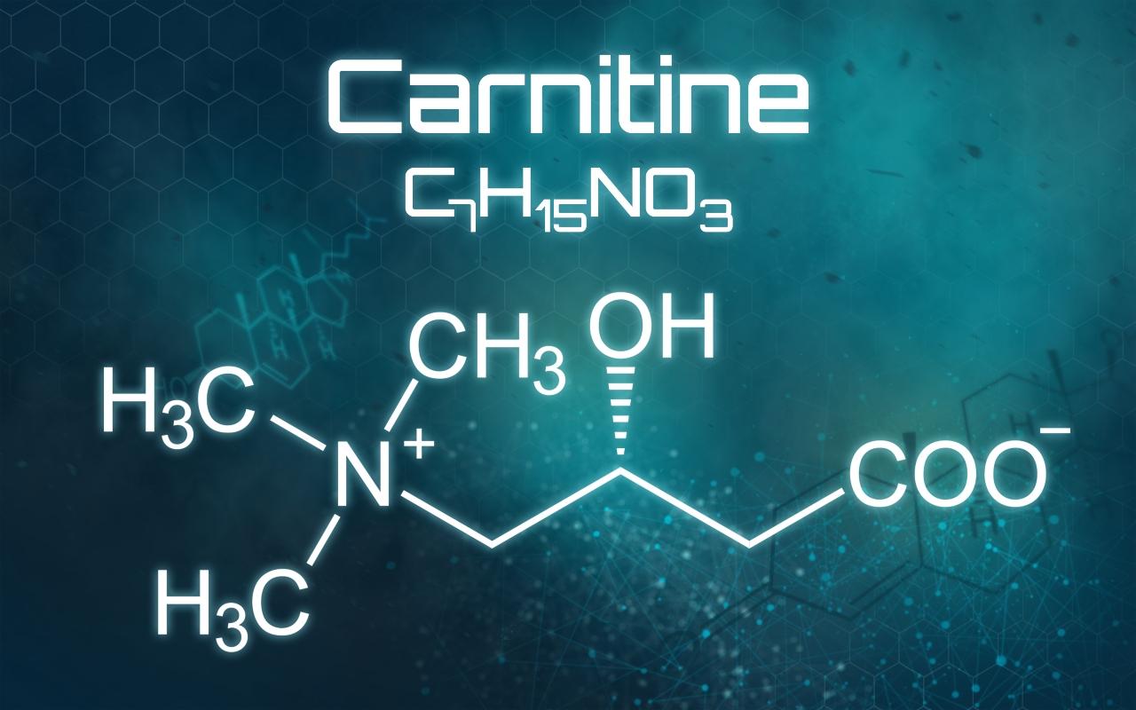 carnitina: fisiologia