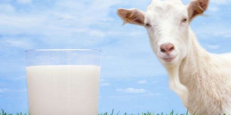 Il latte di capra è più salutare del latte vaccino?
