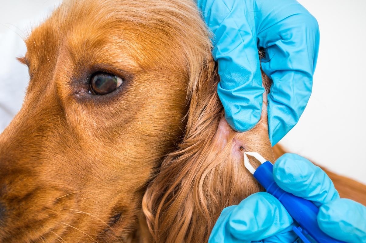 malattia di Lyme: cos'è, cause, fattori di rischio, sintomi, cura e prevenzione