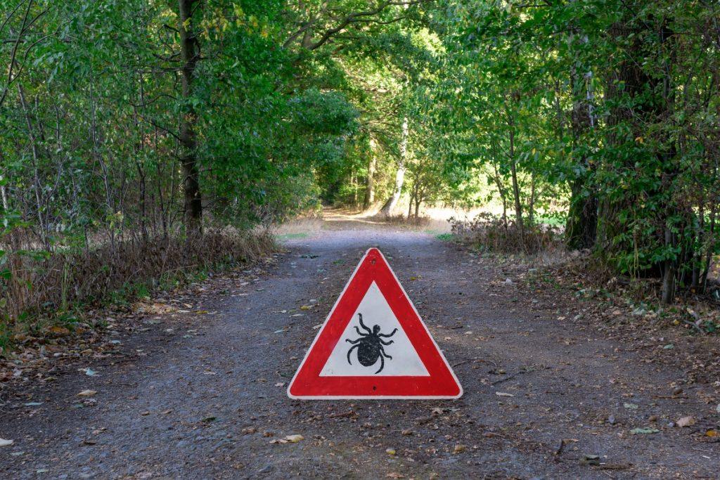 malattia di Lyme: prevenzione