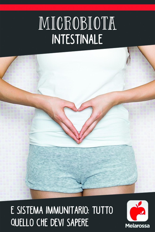 microbiota intestinale e sistema immunitario Pinterest