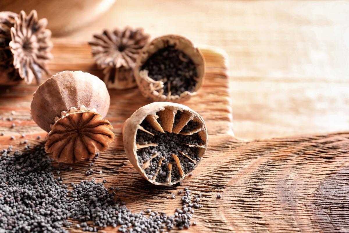semi di papavero: guida all'acquisto