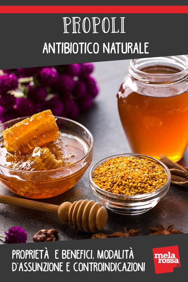 Propoli: antibiotico naturale