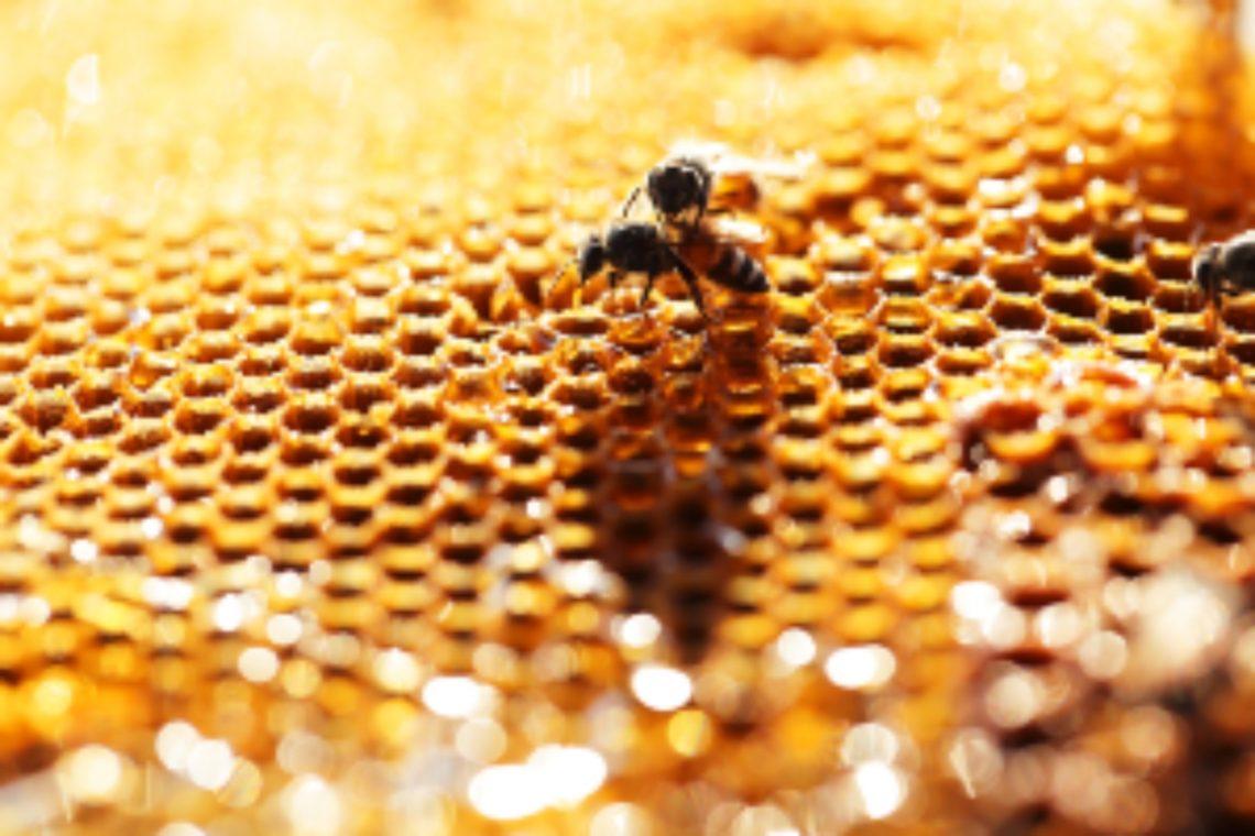 Propoli,antibiotico naturale: proprietà, posologia, usi e..