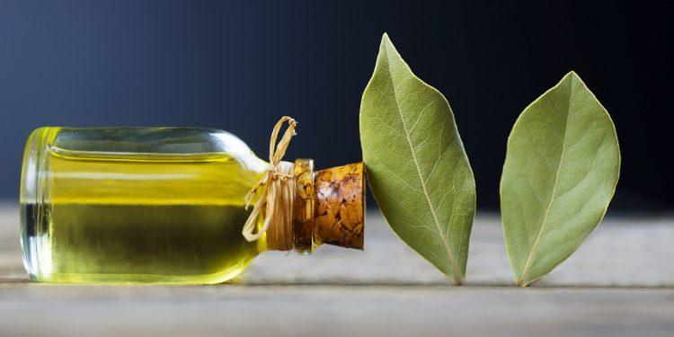alloro: cos'è, proprietà, benefici per la salute, Usi in bellezza e cucina