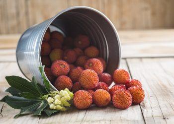 corbezzolo: proprietà, benefici, valori nutrizionali e usi