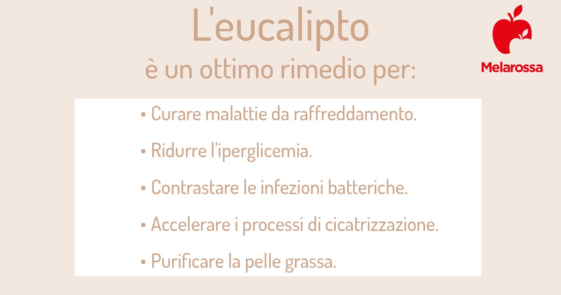 eucalipto: trattamenti