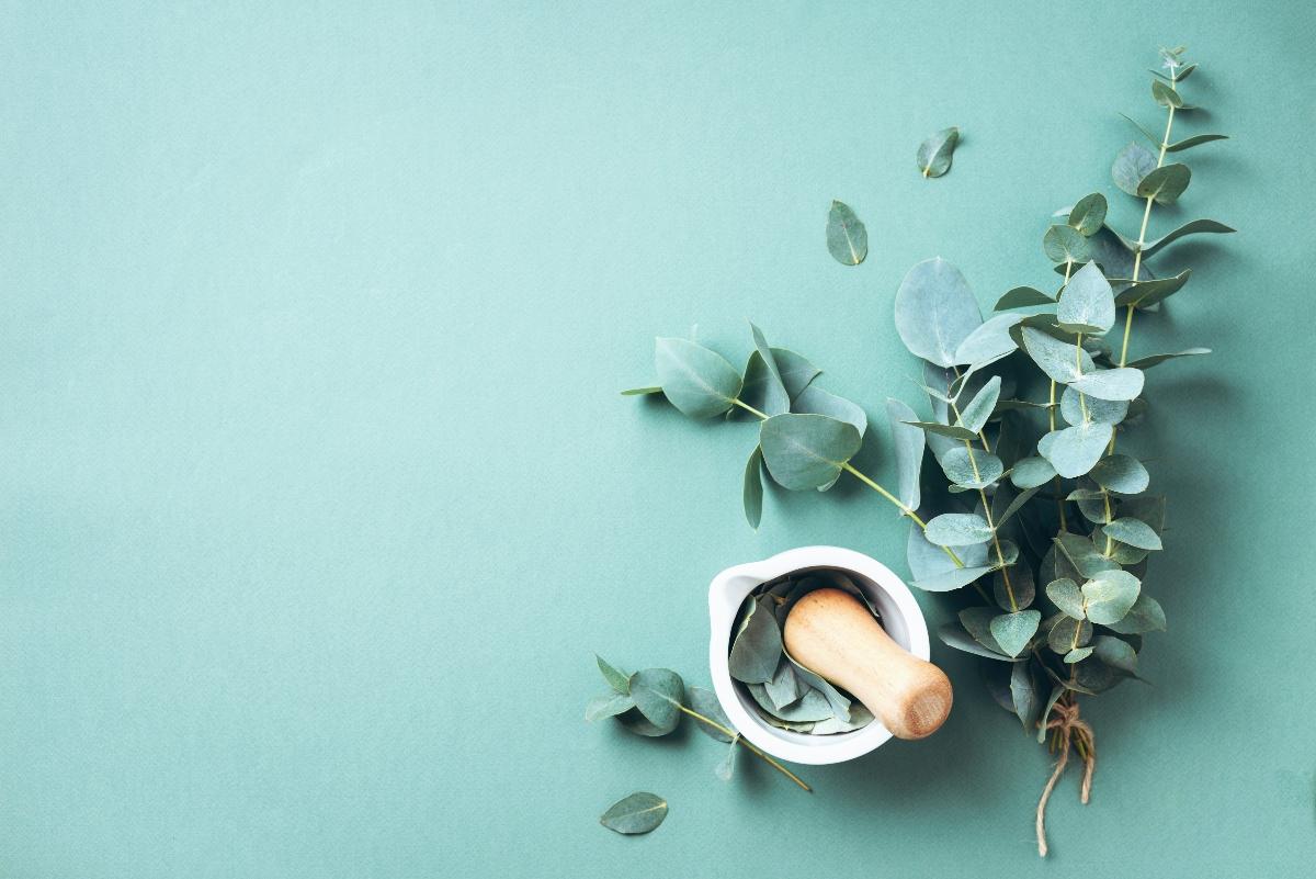 eucalipto: usi in bellezza