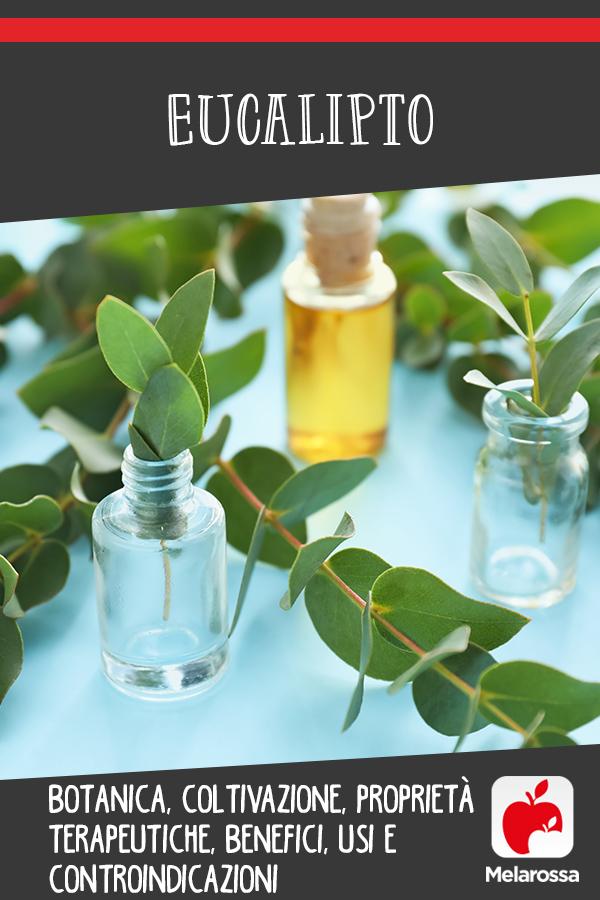 eucalipto: cos'è, coltivazione, proprietà, benefici e usi