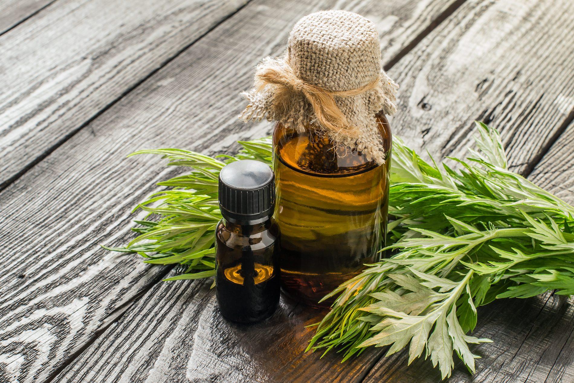 assenzio. benefici dell'olio per la salute