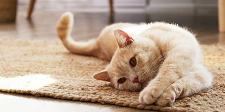 gatti-benefici