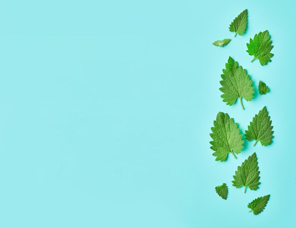 Melissa: benefici della pianta