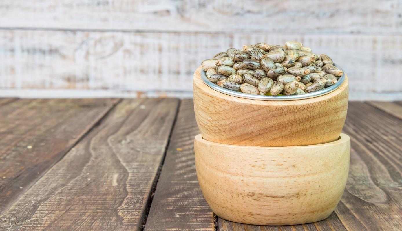 olio di ricino: semi