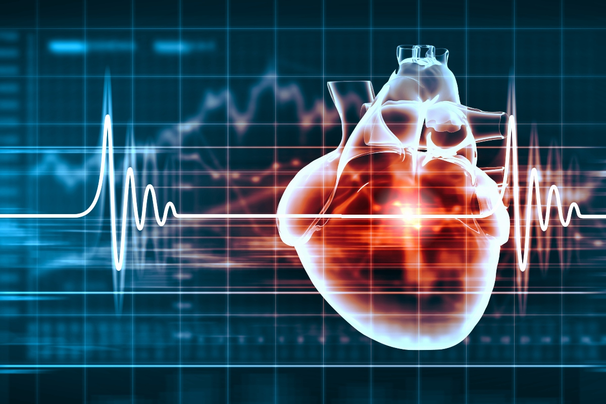 tachicardia: anatomia del cuore