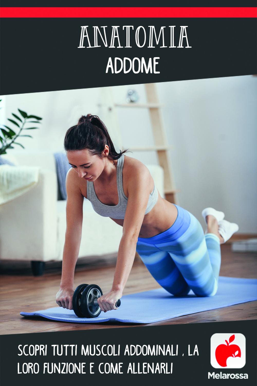 anatomia addome: scopri i muscoli e come allenarli