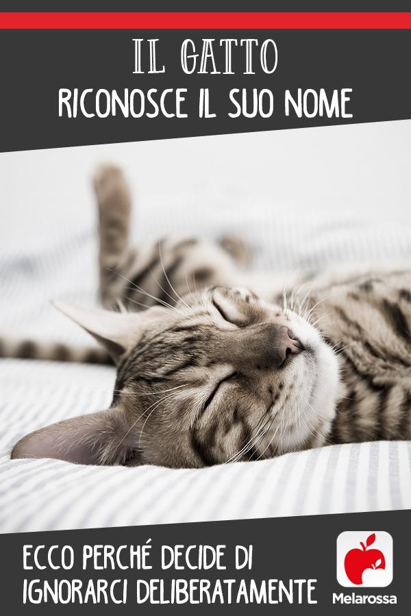 gatti-comportamento